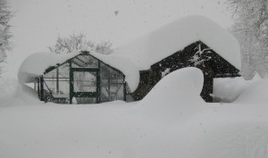 Tropic 13 120m Schneelast das Dach hC3A4lt 300x177 - Kundenmeinungen - WAMA Gewächshaus