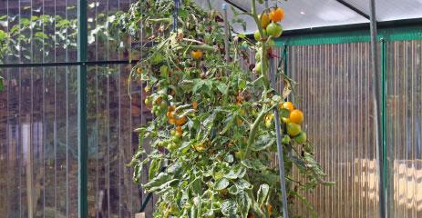 tropic hochbeet 2 - WAMA Hochbeet-Gewächshaus Tropic 13 inkl. Hochbeet – 7.90m²
