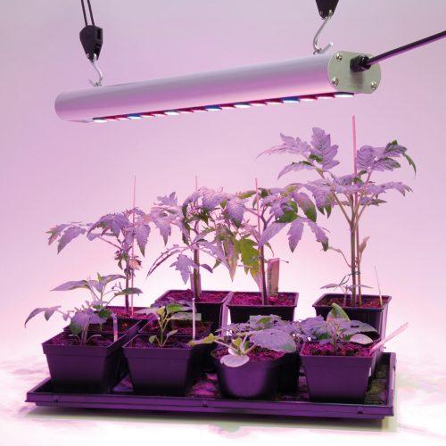 Pflanzen-Anzucht